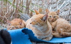 Meet Japan's Amazing Cat Islands: Purr-Fect for Cat Lovers